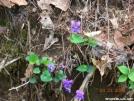 Purple Wildflowers by Rainman in Flowers