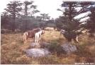 Mt Rogers Ponies