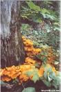 Orange Fungi by Big Guy in Flowers