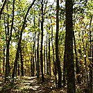 appalachian trail in october by JasonYoung in Trail & Blazes in Virginia & West Virginia