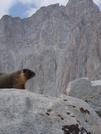 Marmot On Mt. Whitney