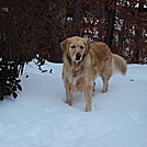 Tatum in the snow. by Eric44 in Other
