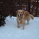 Tatum in the snow.