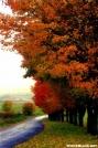 Burkes Garden maples by Groucho in Views in Virginia & West Virginia