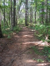 Pinhoti Trail, June 2009 by Bearpaw in Other Trails