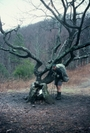 The border oak by Bearpaw in Trail & Blazes in North Carolina & Tennessee