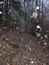 Snow Flurries by Bearpaw in Other Trails