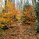Allegheny Trail by Cookerhiker in Other Trails