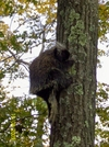 Porcupine by Cookerhiker in Other Trails
