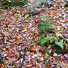 Fallen leaves in VT