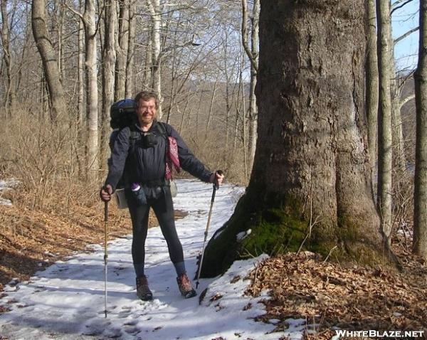 Cookerhiker & Connecticut sycamore