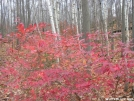 Red Leaves in NY by Cookerhiker in Trail & Blazes in New Jersey & New York