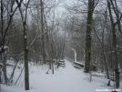 Freshly-fallen snow