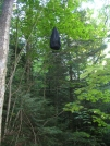Expertly hung bear bag by Cookerhiker in Gear Gallery