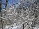 SNP Ice Storm aftermath by Cookerhiker in Trail & Blazes in Virginia & West Virginia