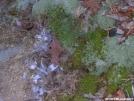Mosses & ice