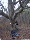 Oak by Cookerhiker in Trail & Blazes in New Jersey & New York