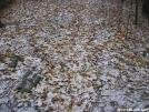 Snowy leaves by Cookerhiker in Trail & Blazes in Virginia & West Virginia