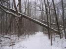 Snowy log at 45 degrees by Cookerhiker in Trail & Blazes in Virginia & West Virginia