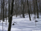 White Blaze, white forest by Cookerhiker in Trail picture (contest)