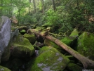 Moss-covered log by Cookerhiker in Trail & Blazes in North Carolina & Tennessee