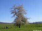Tree on abandoned farm in TN