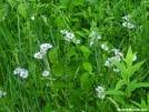 Asters by Cookerhiker in Flowers