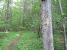 Allegheny Trail Blaze by Cookerhiker in Other Trails