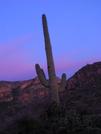 Arizona Trail - Saguaro At Sunset