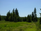 Evergreens & Meadow In Dolly Sods Wilderness by Cookerhiker in Other Trails