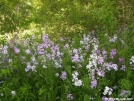 Pink & White Flowers by Cookerhiker in Flowers