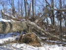 Mother of all Blowdowns by Cookerhiker in Trail & Blazes in Virginia & West Virginia