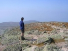 Northern Harrier gazes from Katahdin summit by Cookerhiker in Section Hikers