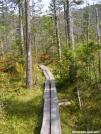 Trail on Barren Mountain