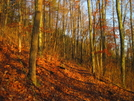 Early Morning On Susquehannock Trail, Pa by Cookerhiker in Other Trails