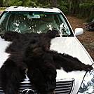 Black Bear by TrippLite in Members gallery