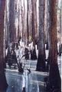 Swampland by stumpy in Members gallery