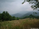 July in the meadow between Sam\'s Gap and Big Bald 28JUL2005 by cabeza de vaca in Trail & Blazes in North Carolina & Tennessee