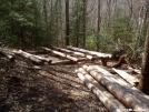 New Roaring Fork Shelter Construction 3 by cabeza de vaca in North Carolina & Tennessee Shelters
