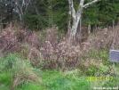 Deer at Double Spring Shelter by SGT Rock in Deer