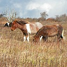 graysonponies by LittleRock in Views in Virginia & West Virginia
