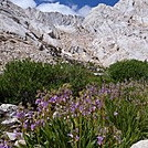 Mt. Whitney by freedomofthehills71 in Pacific Crest Trail