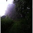 Spider Webbed Path by Caddywhompus in Views in Virginia & West Virginia