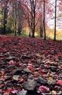 red path by grizzlyadam in Views in Virginia & West Virginia