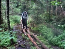 Crossing Puncheons Over Mud Pit Lt Vermont by Rough in Long Trail