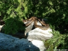 Snake on Baker Peak VT by Rough in Snakes