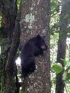 Bear Cubs by Phreak in Bears