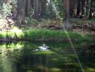 Bear Swimming Across A Pond...