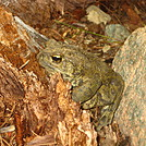 Deadfalls Lake Toad by LibertyBell in Other Trails