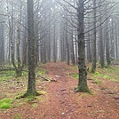 Unaka Mountain Forest by BuckeyeHiker in Views in North Carolina & Tennessee